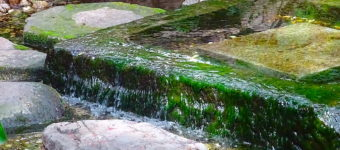 井の頭池は「神田川の源流」で江戸の町の水源だった!