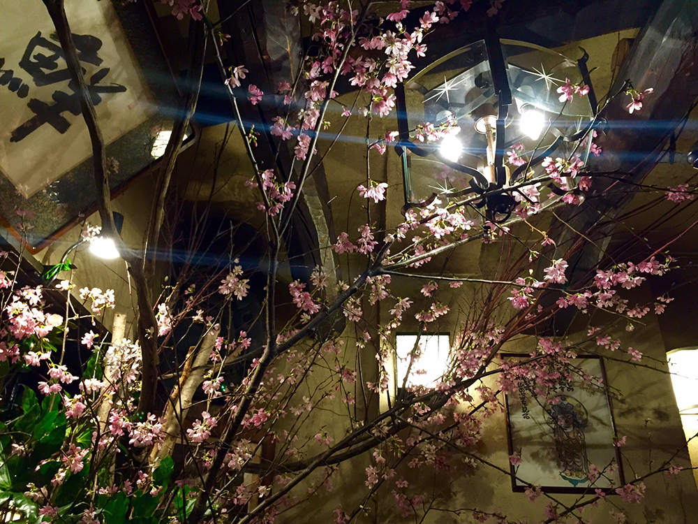 写真5 桜