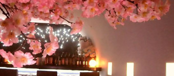 「吉祥寺 SUN Tama Bar」で桜とイルミネーションがコラボした『吉祥寺 夜桜 @ SUN Tama Bar』を4月中旬まで開催中!!