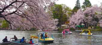 吉祥寺は「東京の巨人伝説」の中心地だった!