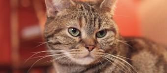 里親募集型猫カフェ「Calico+(きゃりこ)」が6月15日で閉店。